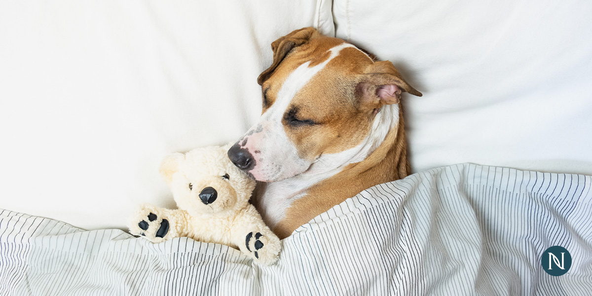 A dog sleeping with its toy